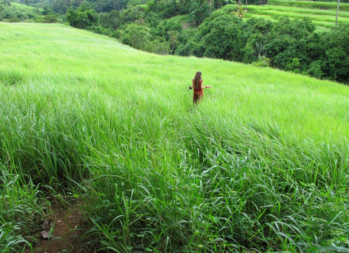 Green Meadow Landscapes of Sukawati