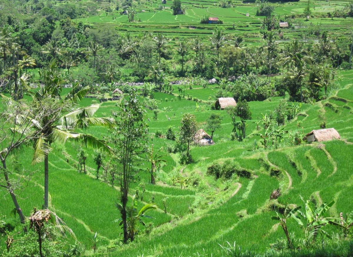 rice fields of Sidemen (Karangasem)